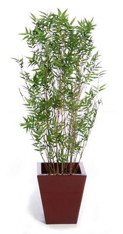 Bamboo Oriental IFR