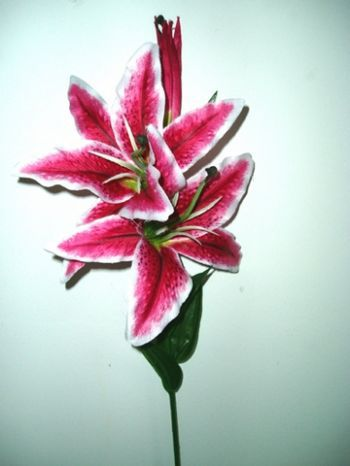 Casablanca Lily Single Stem
