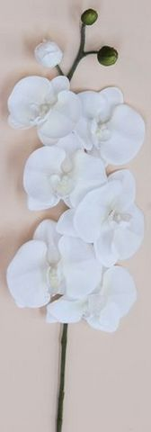 Phalaenopsis Orchid Spray