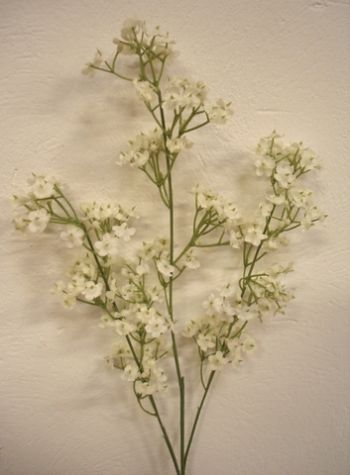 Gypsophilia Single Stem Flower