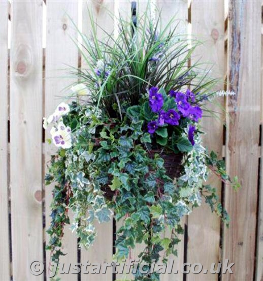 Flowers For Hanging Baskets In Winter : An error has occured