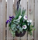 Foliage Small Winter Hanging Basket - Image Caption: Purple & White Pansy Flowers