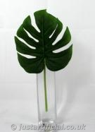 Split Philo Leaves in pack of 3 - Image Caption: Picture of 1 leaf