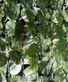 Artificial Ivy Hedging - Image Caption: Artificial Ivy Hedge up close