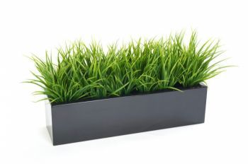 Grass Bushes in Trough