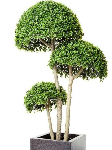 Artificial Boxwood Triple Stemmed Ball Tree Just Artificial