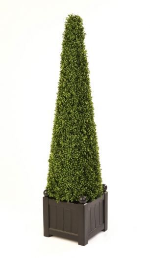 Boxwood Cone