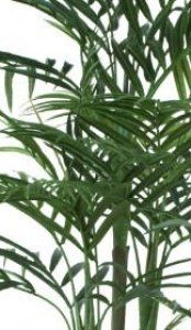Close up of Artificial Areca Palm