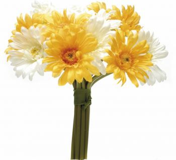 Gerbera Mini Bundle