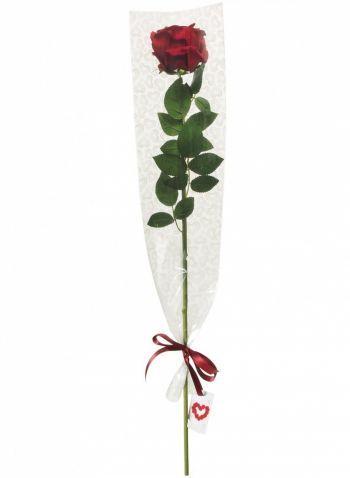 Rose, Valentine Gift