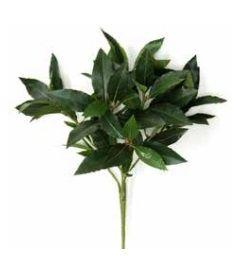 Bay Leaf Spray IFR