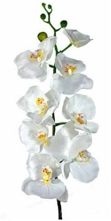 Phalaenopsis Orchid (Real Touch)