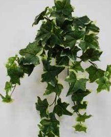 Sage Ivy Hanging Bush Trail
