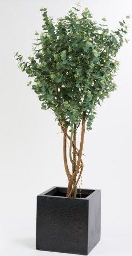 Artificial Eucalyptus Tree Just Artificial