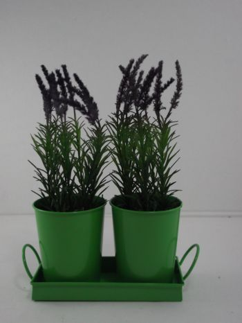 Rosemary In Metal Pot (2 set)