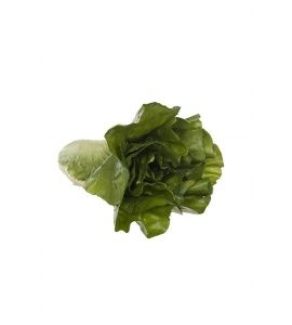 Romaine Lettuce Natural Touch