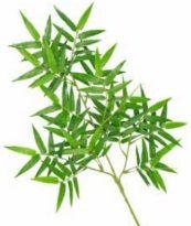 Bamboo Oriental Leaf IFR