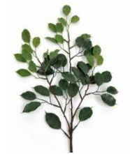 Ficus Mini Leaf Spray UVSILK