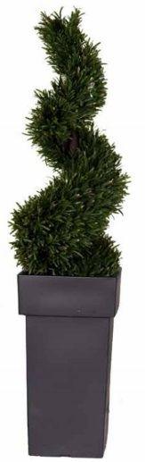 Rosemary Spiral Tree