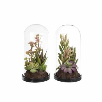 Succulent Mix in Glass Dome