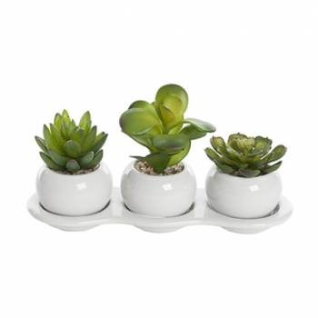 3x Succulents in a Ceramic Tray