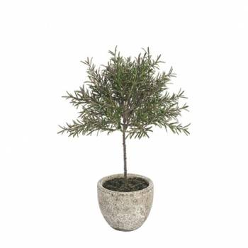 Rosemary Topiary Tree Potted