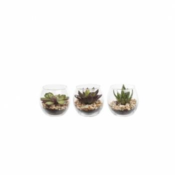 Succulents In Bubble Glass