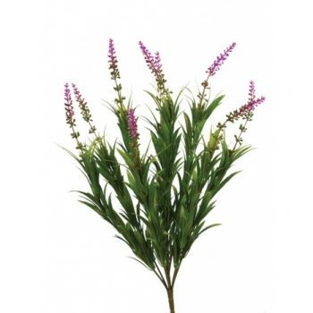 Lavender/Spider Bush UV 6 Pack