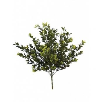 Flowering Boxwood Bush UV 6 Pack