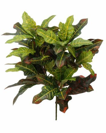 Croton Spray FR