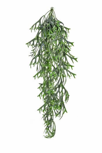 Staghorn Hanging Trail UV FR