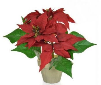 Poinsettia Potted Arrangement
