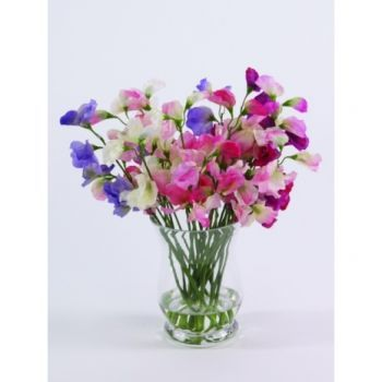 Sweet Peas in Hurricane Vase