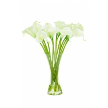 White Calla Lilies in Vase