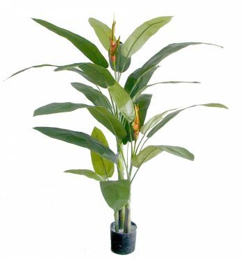 Heliconia Palm Tree FR