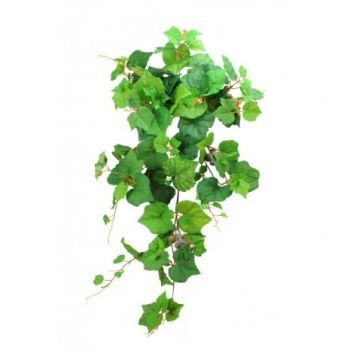 Grape Bush Vine with Grapes x3 Saver Pack