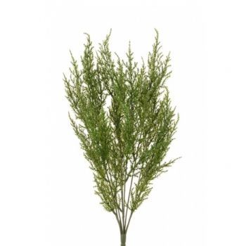 Cypress Bush UV x6 Saver Pack