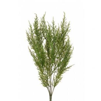 Cypress Bush UV x6 Saver Pack