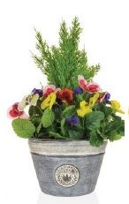 Cedar and Pansies Planter