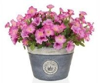 Petunias in a Planter