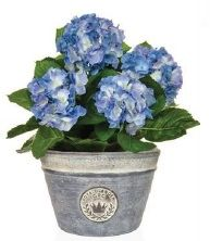 Hydrangea Ready Made Planter