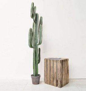 Cactus Plant with Brown Pot