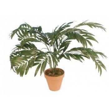 Parlour Palm Plant FR