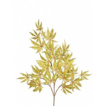 Maple Branch FR