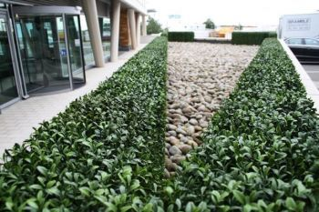 Artificial Hedging Panels Bulk Buy