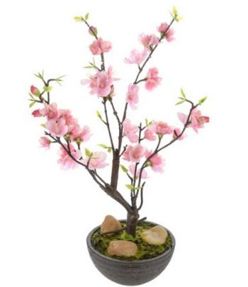 Potted Cherry Blossom Tree