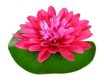 Lotus Lily Pad