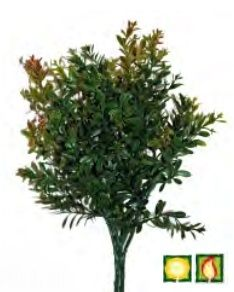 Foliage Buxus FR UV