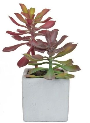 Succulent in White Cement Pot
