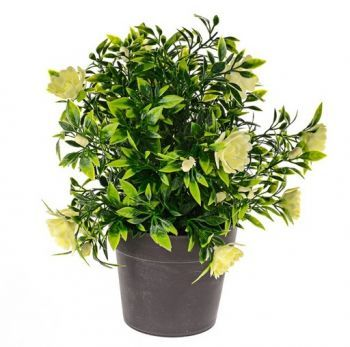 Bloom Potted Plant Bush
